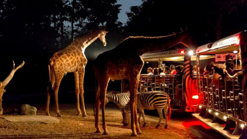 Night Safari 3