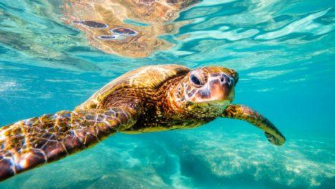 Titik Penyu / Turtle Bay