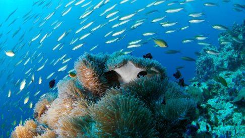 Tokong Laut